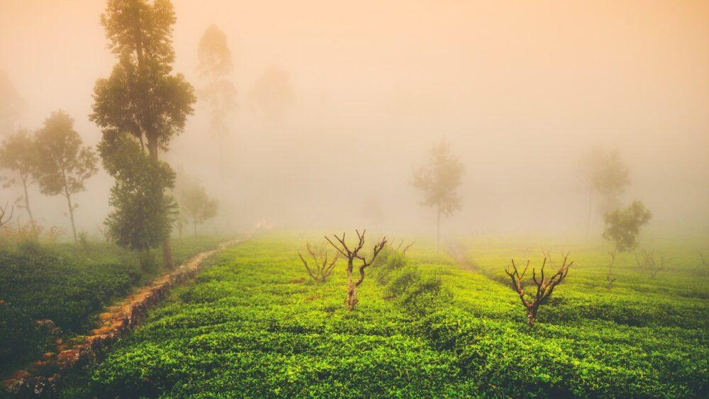 茶葉の産地